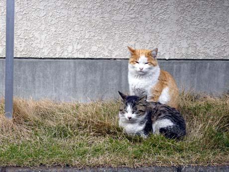 たたずむ二人(猫)