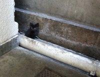 小さな黒ネコ