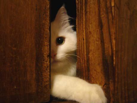 ドア越し攻撃